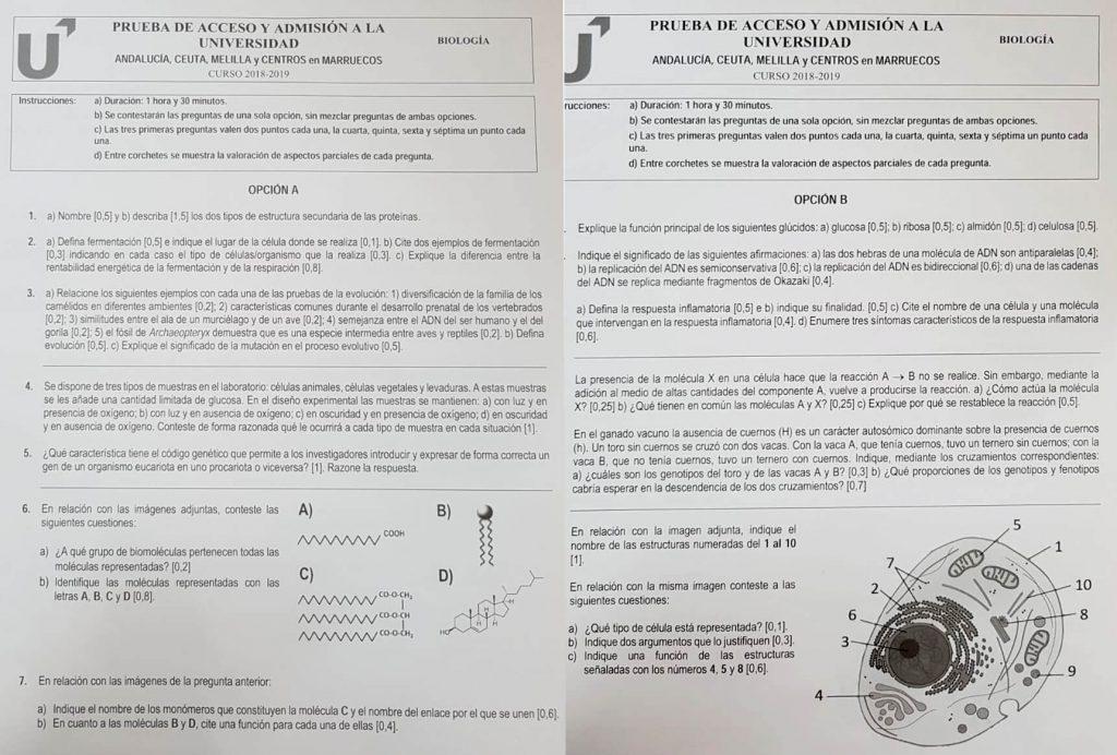 Examen de Biología (convocatoria de junio de 2019, Andalucía)